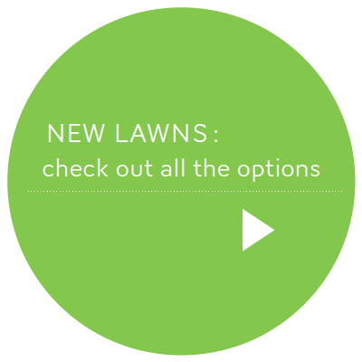 New Lawns - check out all the options